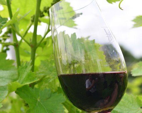 Taça de vinho-Foto Gilmar Gomes