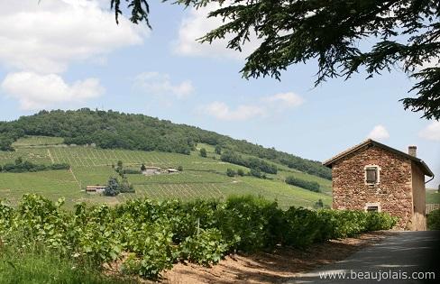 Verão no Beaujolais-Extraído do site