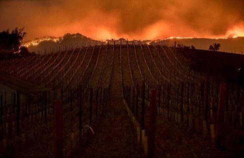 Mount Veeder- Photo Jackson Family Wine